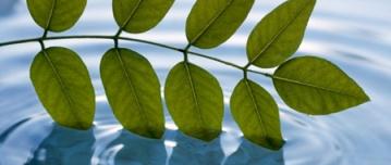 mindfulness baseret stress reduktion - mbsr